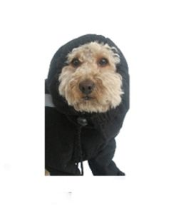 Hood or hat for dog