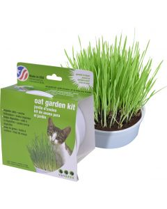 Jardin d'avoine pour chats Van Ness