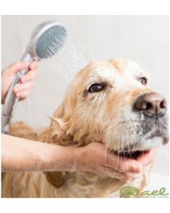 Dog or cat grooming preparation course