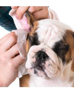 COMPLETE GROOMING AND HEALTH CARE COURSE