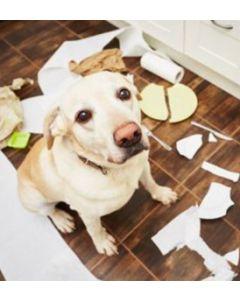 problème de comportement canin