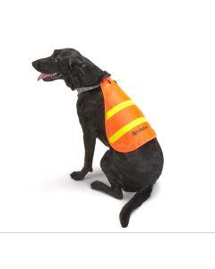veste de securité orange pour chien